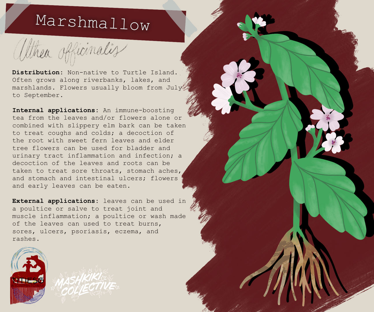 Marshmallow TW.png
