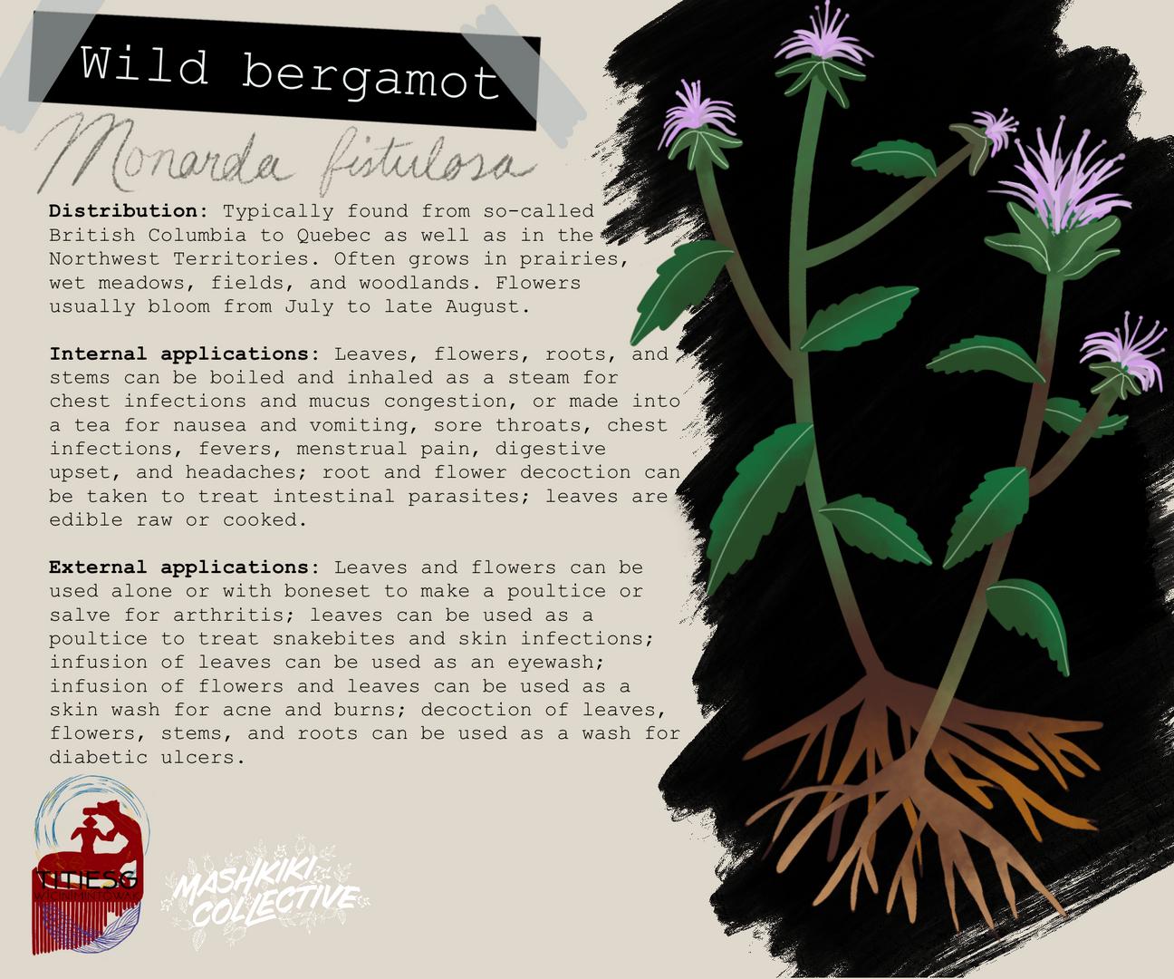 Wild Bergamot TW.png