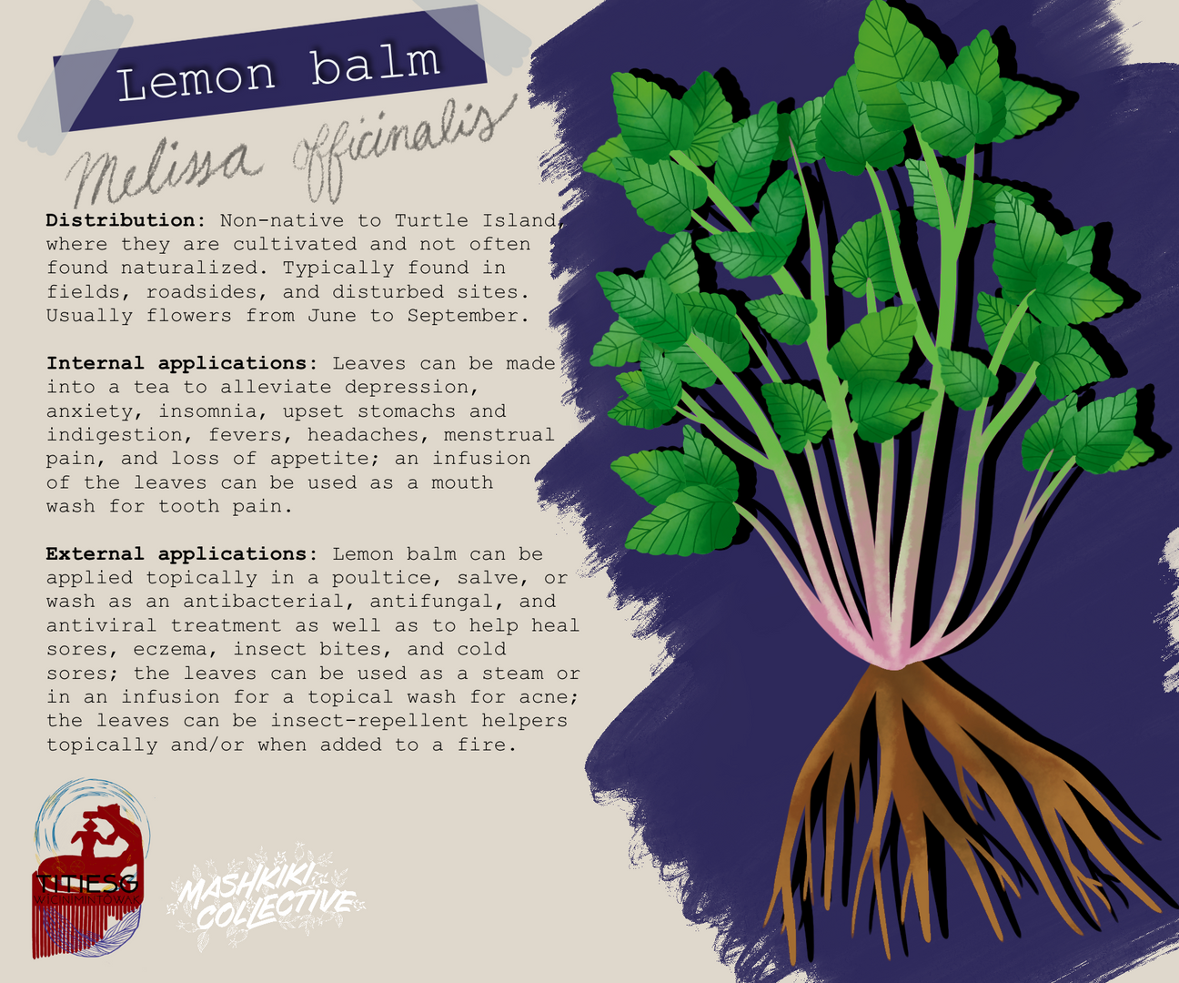 Lemon Balm TW.png