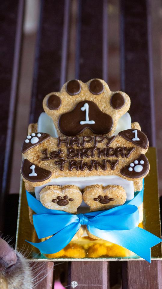 Tawny's 1st Birthday