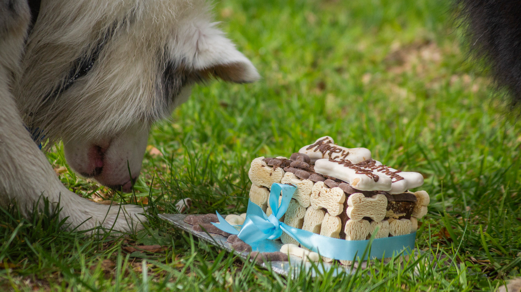 Smudge & Smurf's 1st Birthday