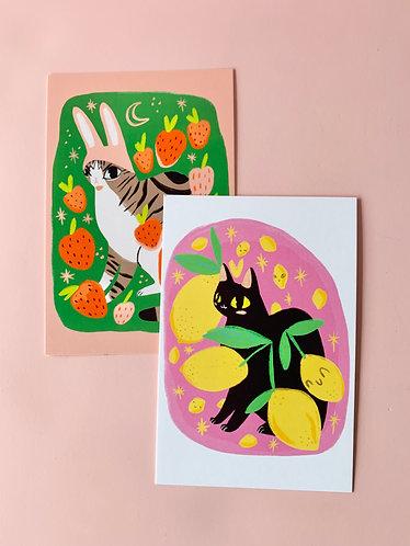 """4"""" x 6"""" Cat Prints"""