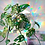 Thumbnail: Cloud Cling - Suncatcher