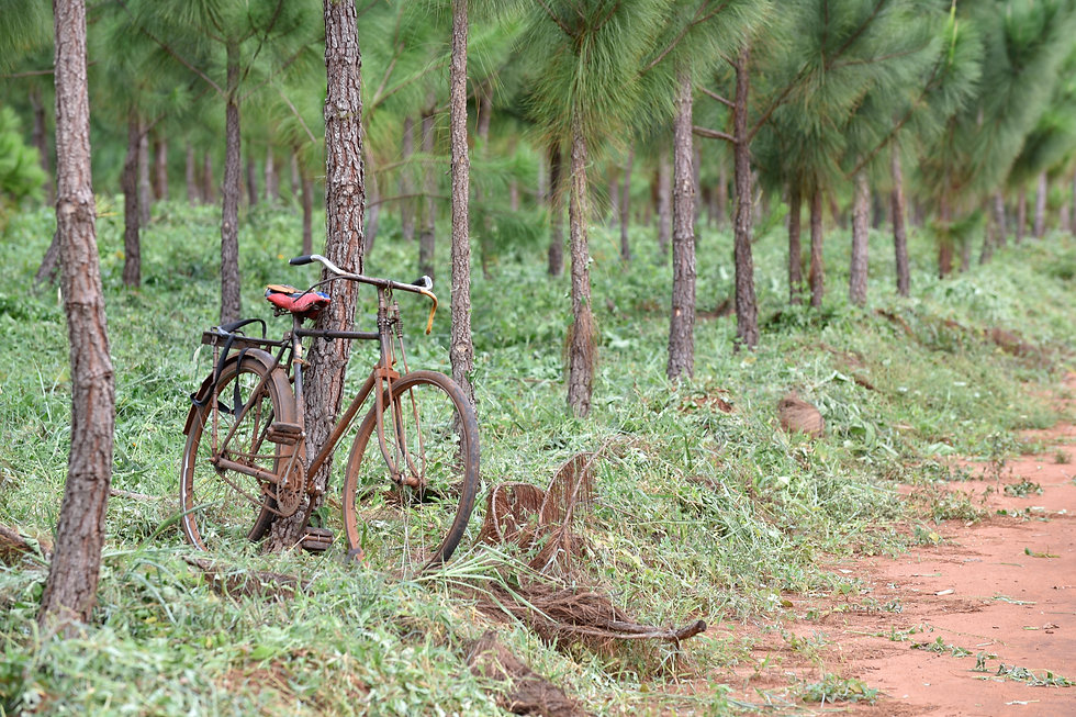 Bicycle at pine trial.jpg