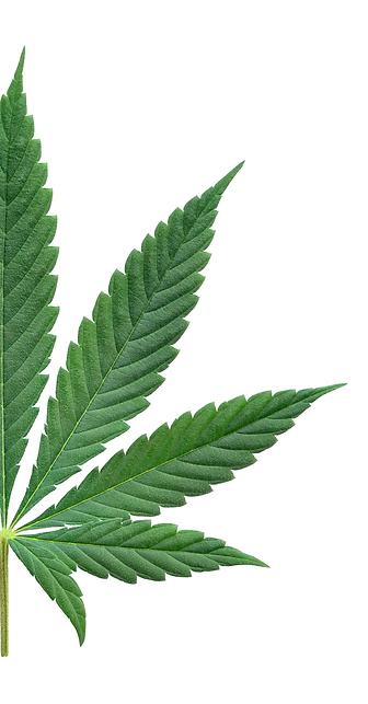 Cannabis_Leaf_half.png