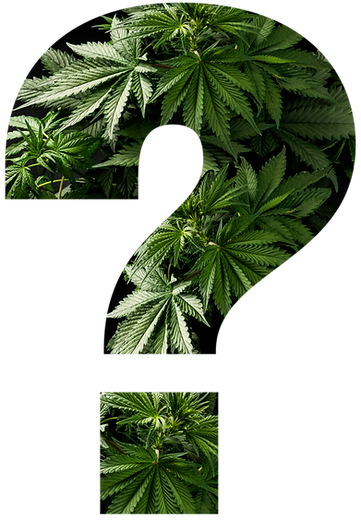 Cannabis_Question_edited.png