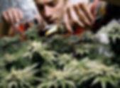 grower.jpg