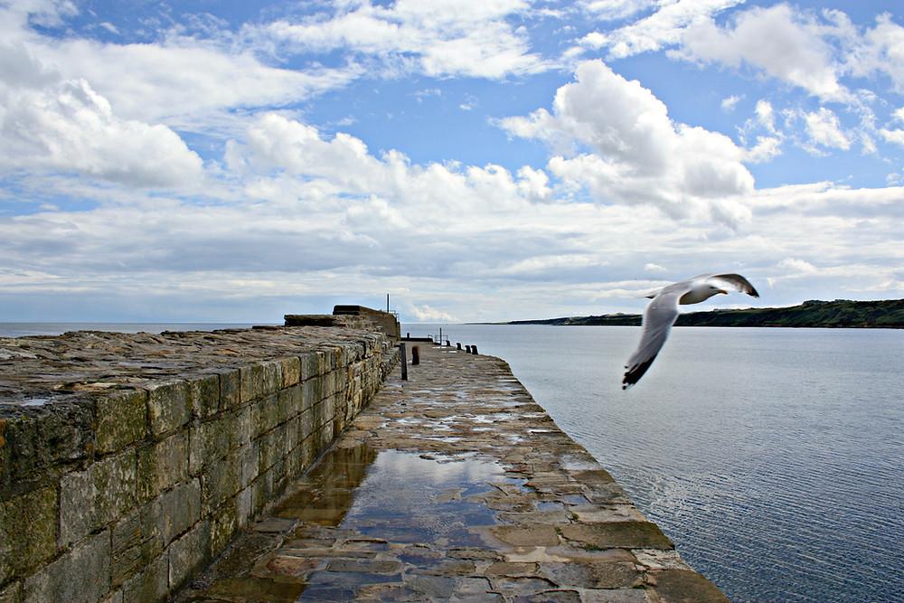 Seagull flying across St Andrews Pier in Scotland