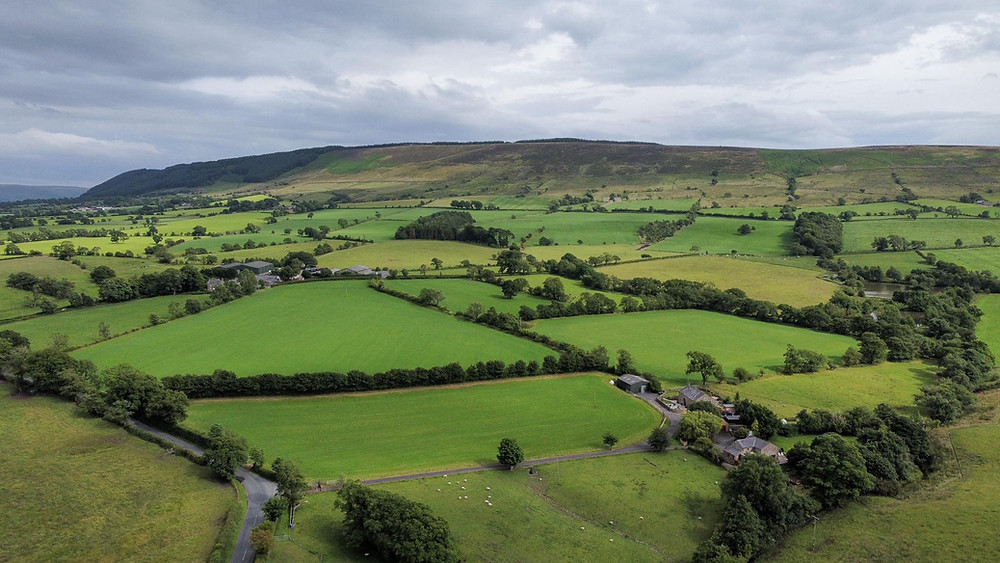 Lush green fields separated by rows of trees, seen from an aerial view.