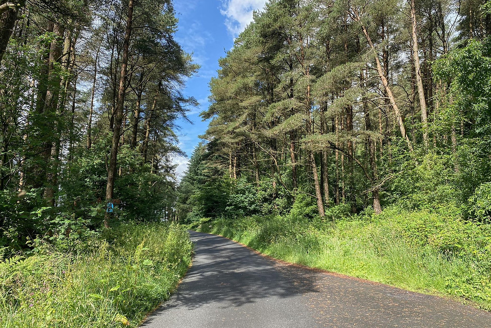 A paved road cutting in between trees in a forest.