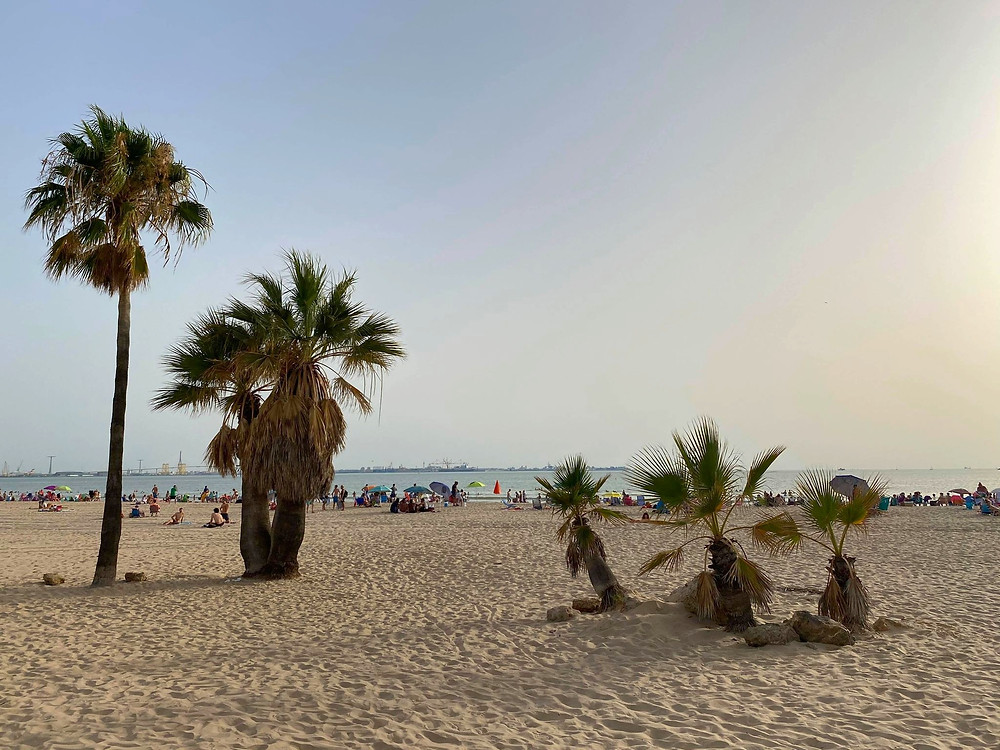 Playa de Valdelagrana palm trees in Cadiz, Spain