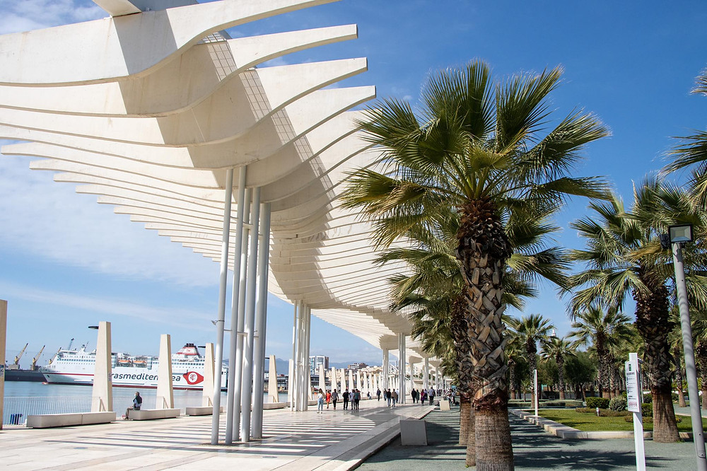 Promenade along the seafront lined with palm trees.