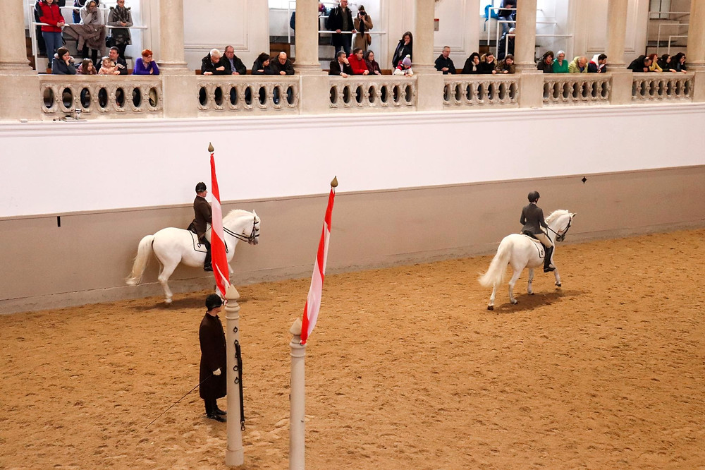 View of 2 Andalucian white horses with riders on top in an indoor training area covered in sand. People are watching from higher on a balcony.