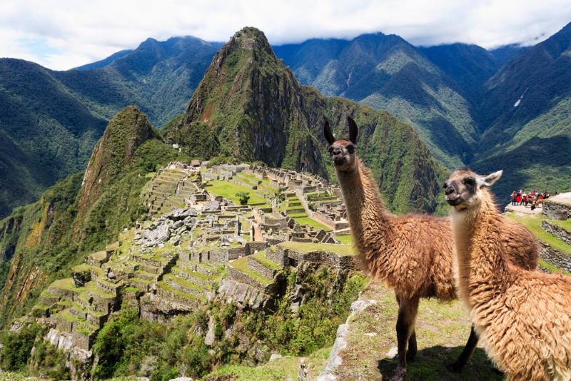 Machu Picchu view with alpacas in Peru