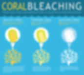 Coral infographic.jpg