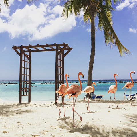 Aruba is calling.. Wenn dich ein Flamingo sanft wach küsst ❤ Kleine Antillen