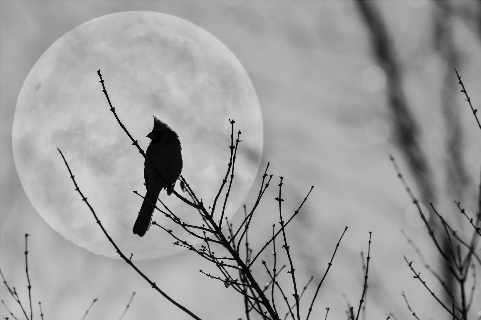 Bird In The Moon