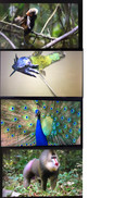 Male animals