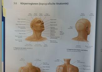 Körperregionen.JPG