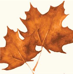 Rustic leaves emblem