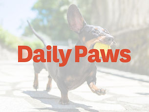 Daily-Paws-Card.jpg