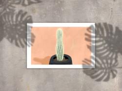 cactus MU
