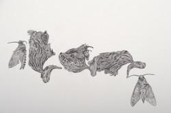 Artist Evgenia Novikova