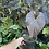 Thumbnail: Rare Red beauty anthurium plant in pic