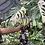 Thumbnail: Albo monstera cut