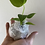 Thumbnail: Anthurium king -baby plant about 4 months old