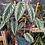 Thumbnail: Begonia vine BIg leaf  CISSUS DISCOLOR exact plant in pic