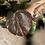 Thumbnail: HIBISCUS TILIACEUS VARIEGATA