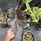 Thumbnail: Anthurium chamberlainianum-rare