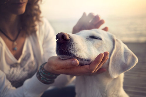 REIKI for your Pet/ Animal - Level 2 (Advanced)