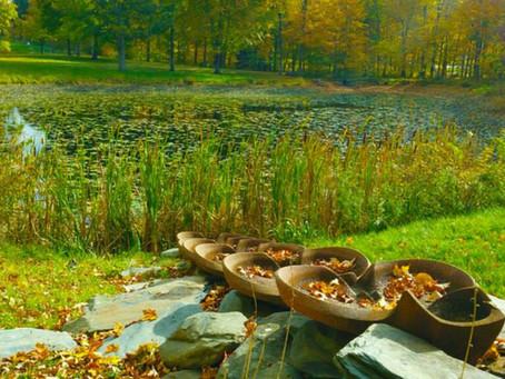 Eliminating Undesirable Aquatic Plants