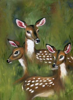 3-fawns004