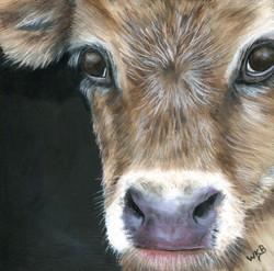 calf painting235