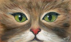 green-eyed cat257