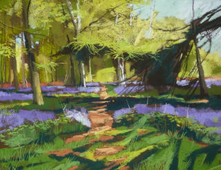 A Bluebell Canopy