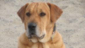 Dog_Mast_cell_tumor_skin_allergy.jpg