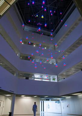 Luminoglobines
