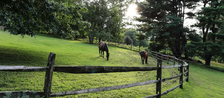 TOP 5 LISTINGS FOR HORSE ENTHUSIASTS