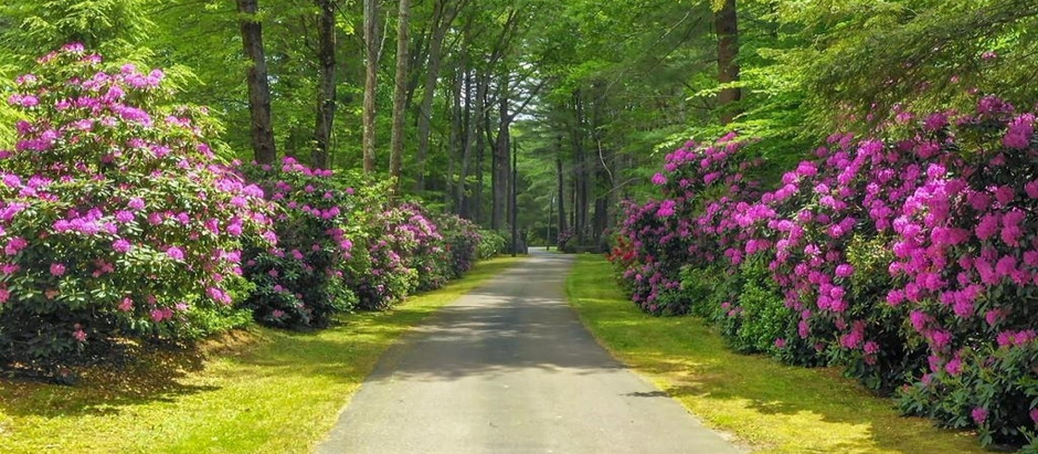 TOP 5 SOUTH SHORE LISTINGS WITH A LONG DRIVEWAY