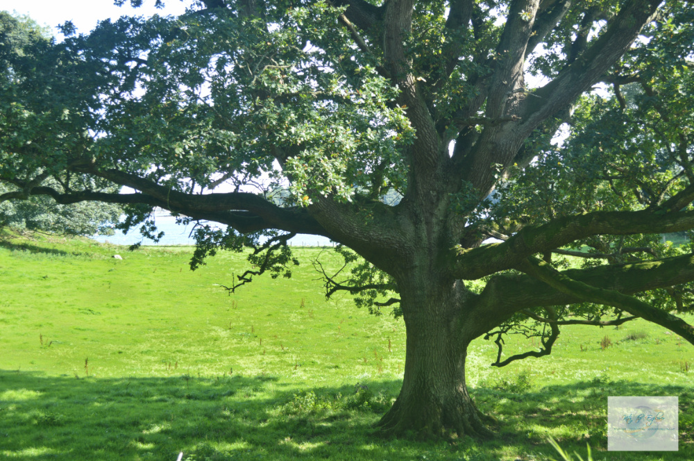 Robb Stark's Wedding Tree