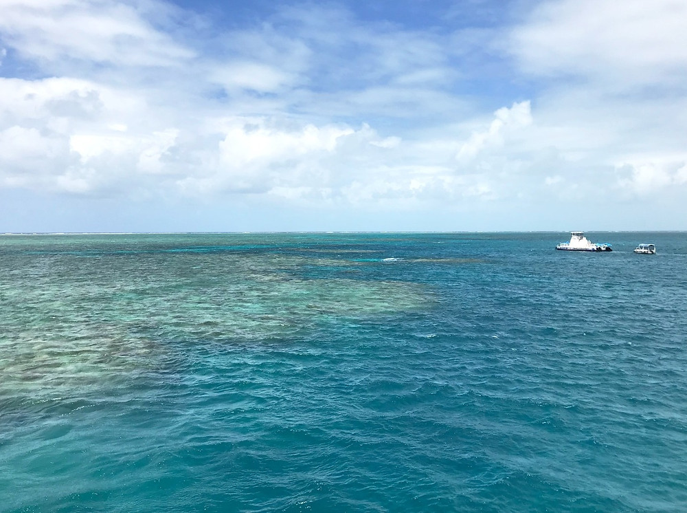 Photo of the reef above water by Kita the Explorer