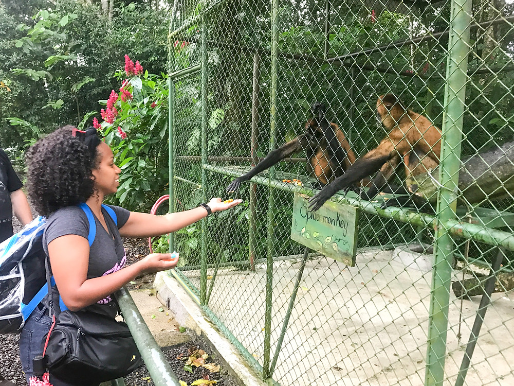 Feeding rescued monkeys at Proyecto Asis