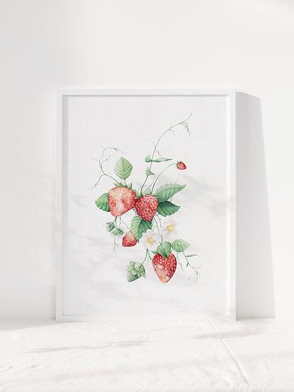 fruity a4  giclee print
