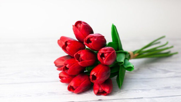 Red 12 Stem Tulips