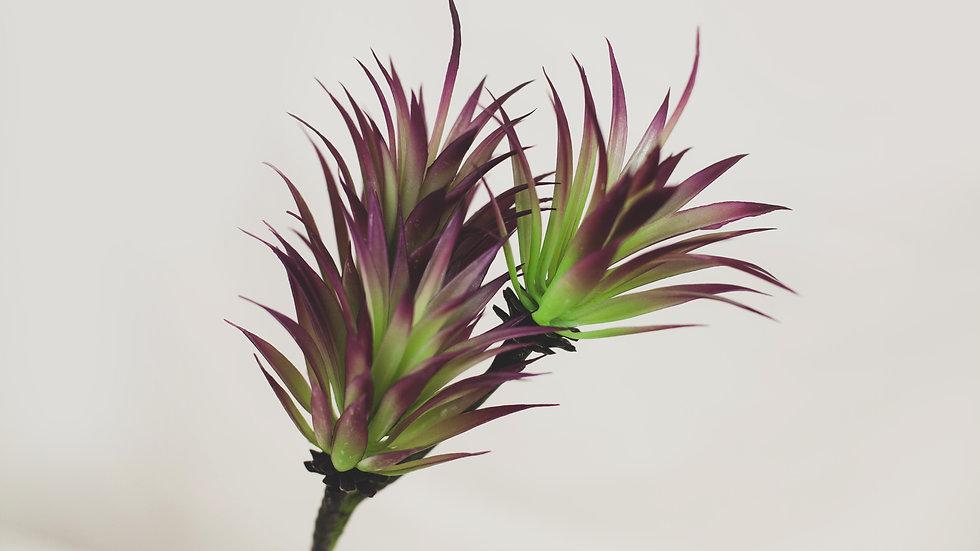 Little Jewel Succulent Stem