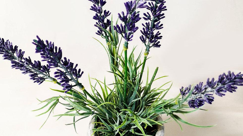 small lavender in a mini pot